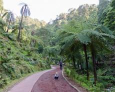 Weg zur Caldeira Velha