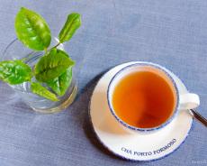Tee-Verkostung