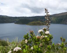 Vegetation am Ostufer der Lagune