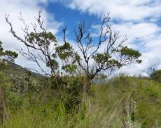Vegetation an der Kraterlagune