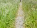 Weg durch die Wildblumenwiese