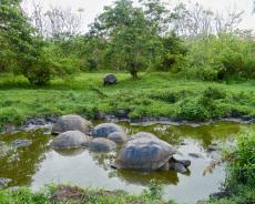 Badetag der Schildkröten