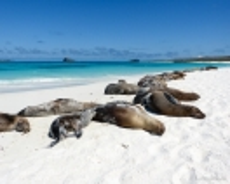 Seelöwen beim Sonnenbad