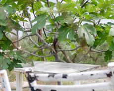 Axt im Baum