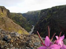 Canyon auf dem Laugarvegur
