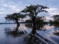 Bäume in der Lagune