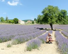 Lavendelfeld in Aurel