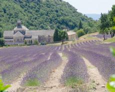 Frankreich-Provence-Lavendel-Abbaye-de-Senanque