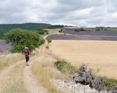 Lavendelweg in Ferrassières