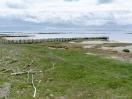 Lahnungen an der grünen Küste von Mandø