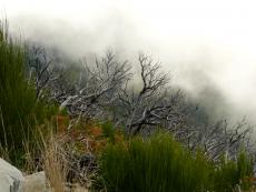 Wolken über dem toten Wald