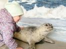 Seehund streicheln in der Seehundstation