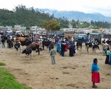 Kuhhandel in Otavalo