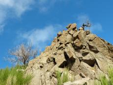 Baum wächst auf Felsen