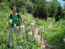 Pflanzenwelt im Ordesa-Nationalpark
