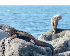 Meerechse & Blaufußtölpel