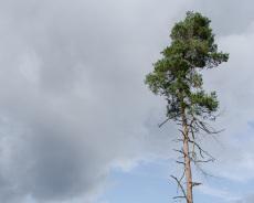 Ausblicke im Teutoburger Wald