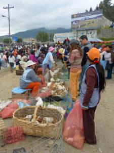 Verkauf von Meerschweinchen