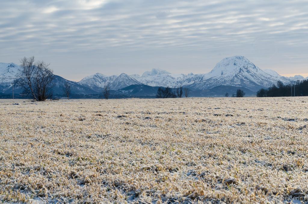 Goldene Felder nahe Sortland