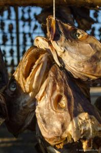 Fischköpfe