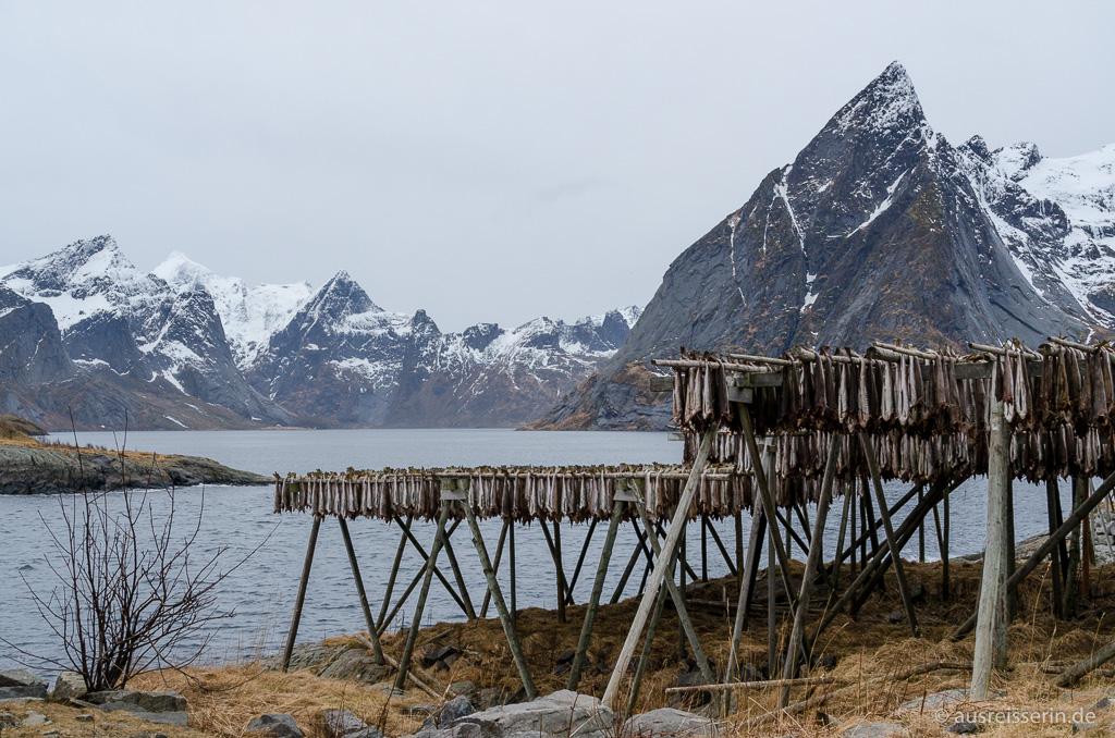 Fischgestelle in Hamnøy