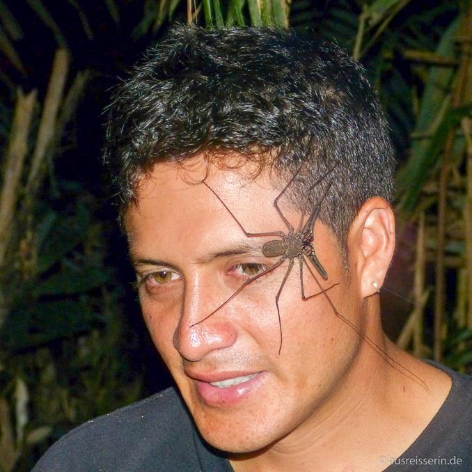 Skorpionspinne im Gesicht