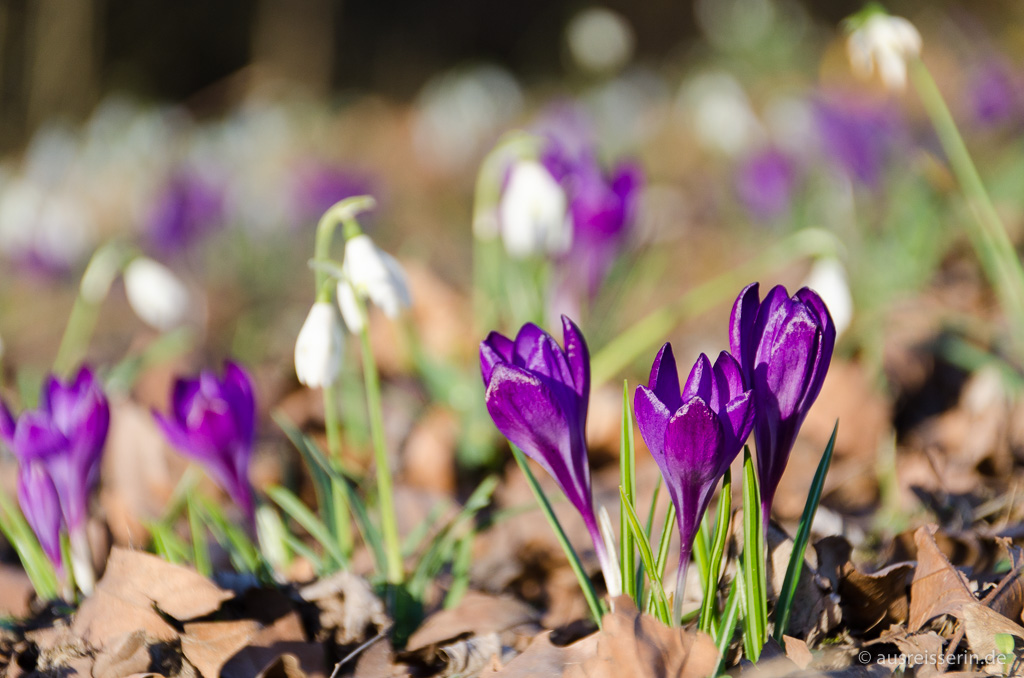Frühling in Dortmund