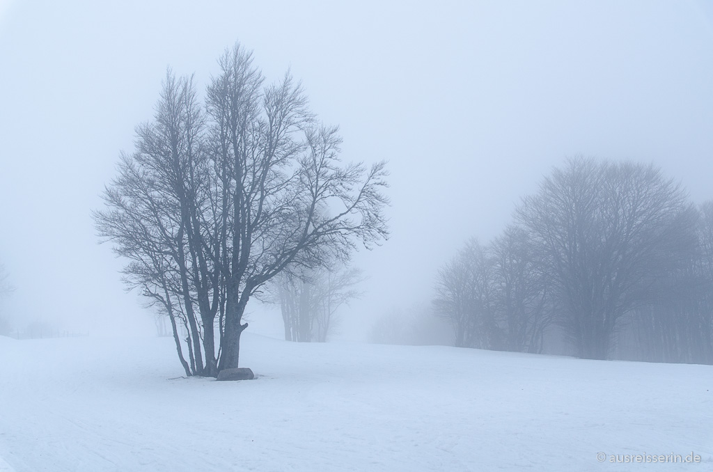 Winterlandschaft am Ballon d'Alsace