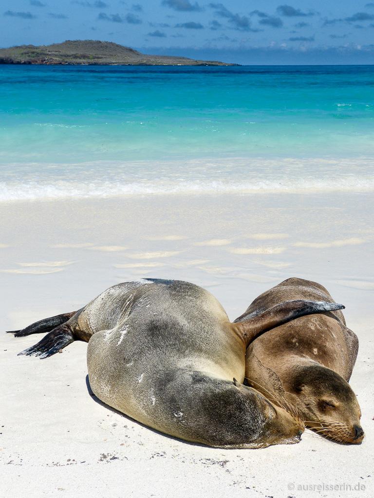 Kuschelnde Seelöwen