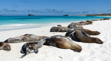 Galápagos: Besuch der süd-östlichen Inseln (Teil 2)