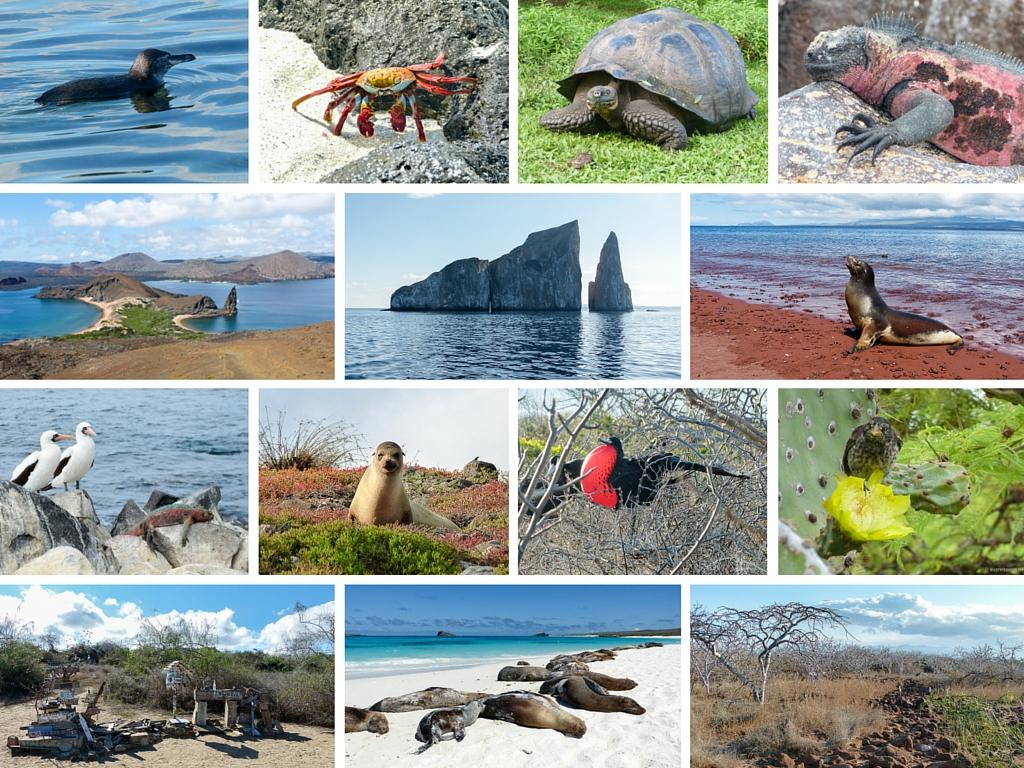 Galápagos - Wunderbare Vielfalt!