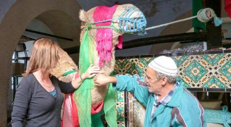Heiliges Kamel in Kairouan