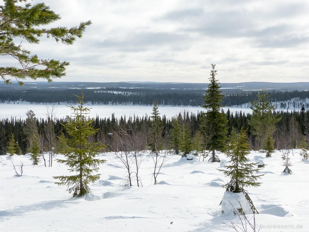 Ausblick auf die Fjell-Landschaft, Salla, Finnisch Lappland