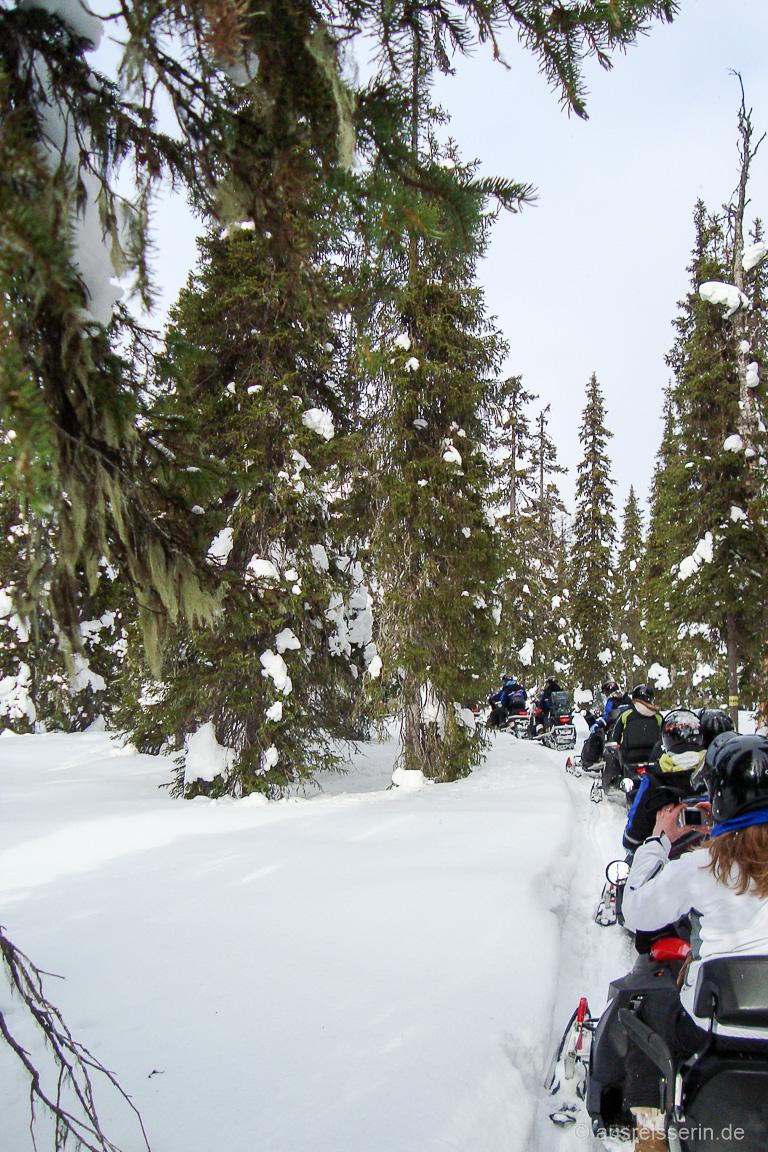 Wartende Schneemobile: Stau im lappländischen Winterwald