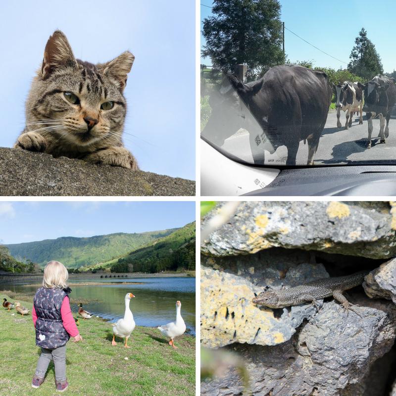 Tiere auf den Azoren