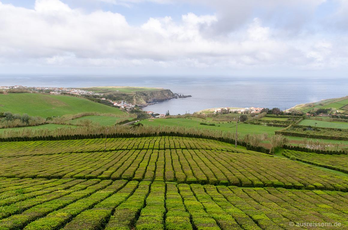 Teeplantage Chá Porto Formoso