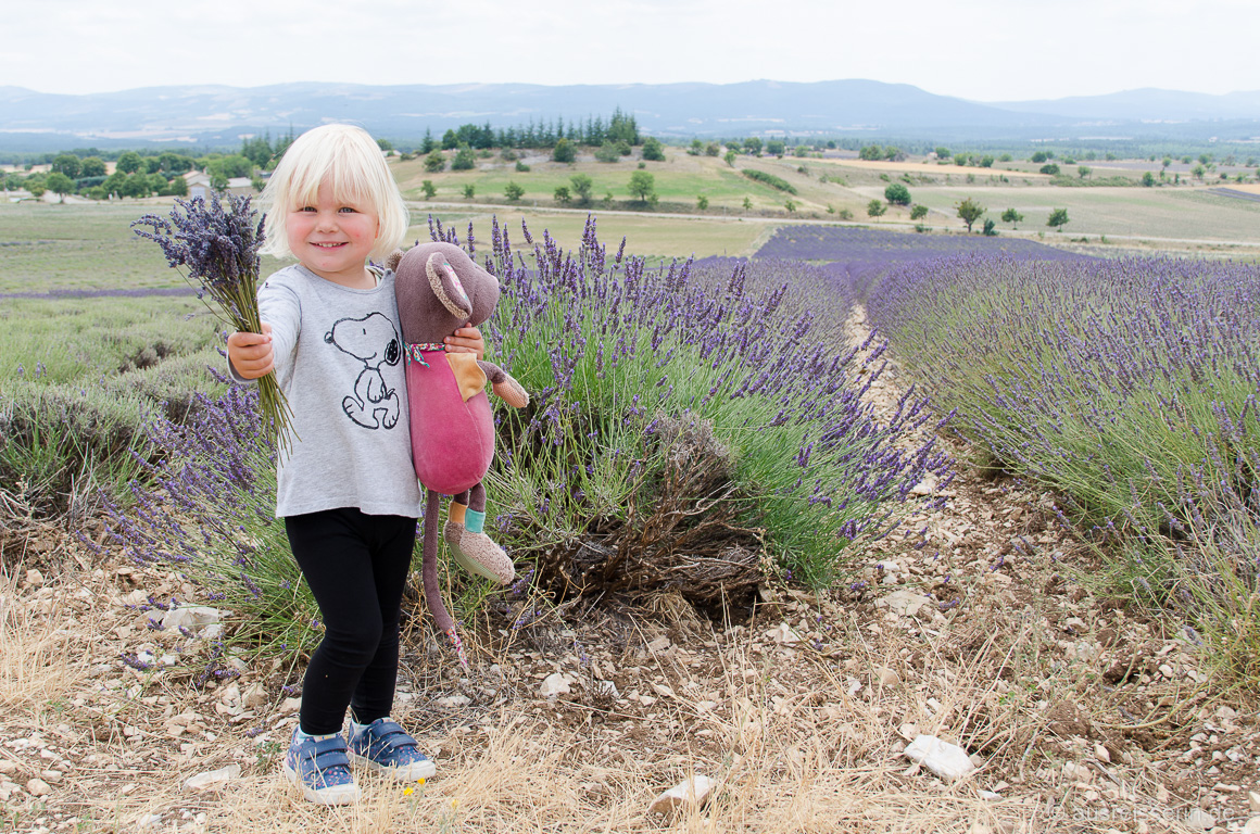 Lotta liebt Lavendel