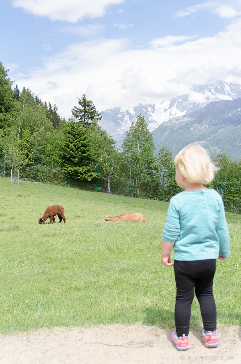 Lotta beobachtet Lamas