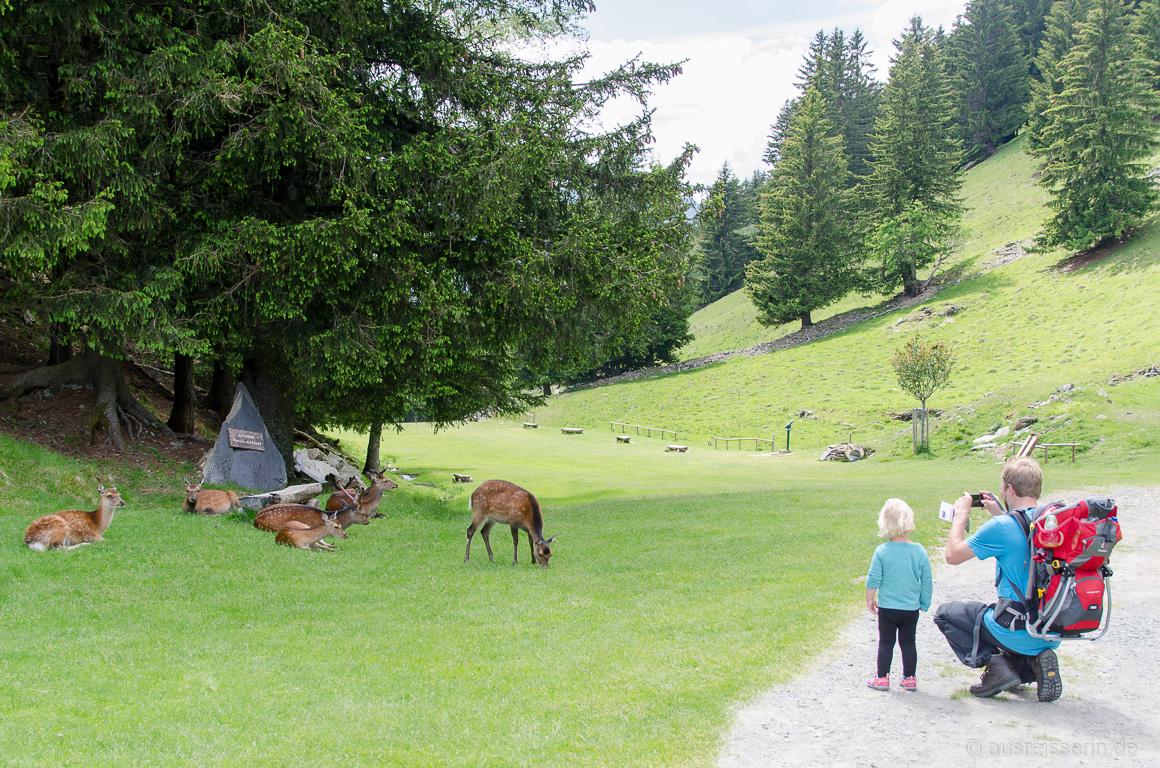 Lotta und Jan beobachten Rehe