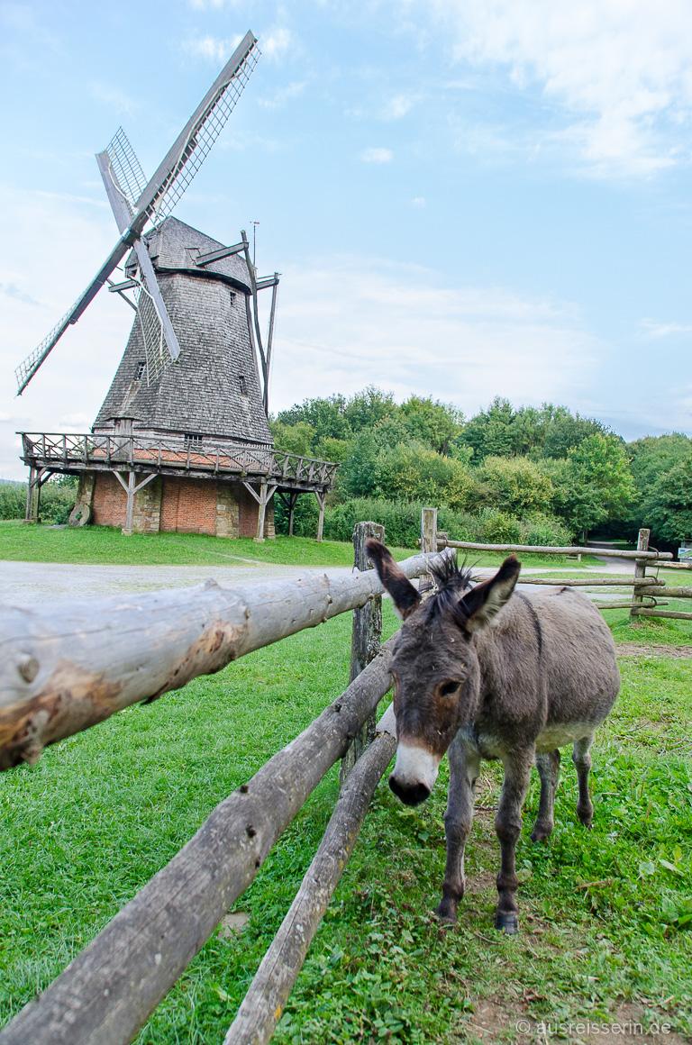 Esel im Freilichtmuseum Detmold