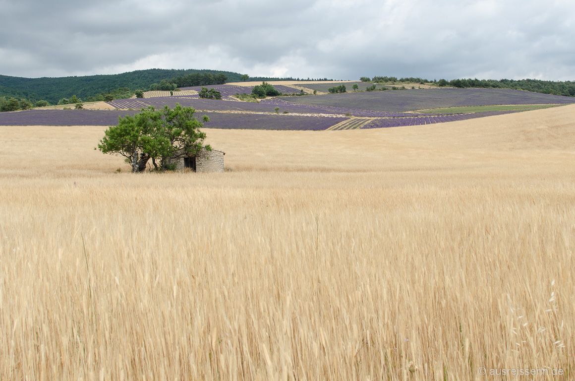 Korn- und Lavendelfelder in Ferrassières