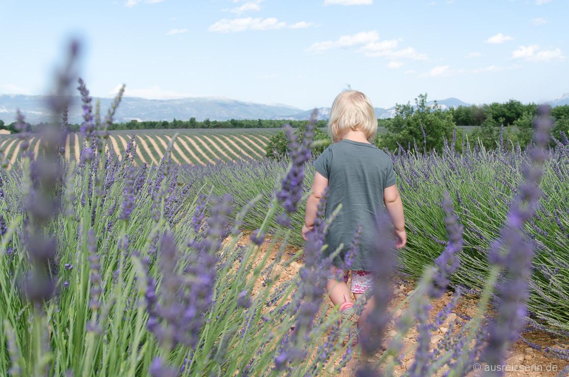 Lotta im Lavendelfeld