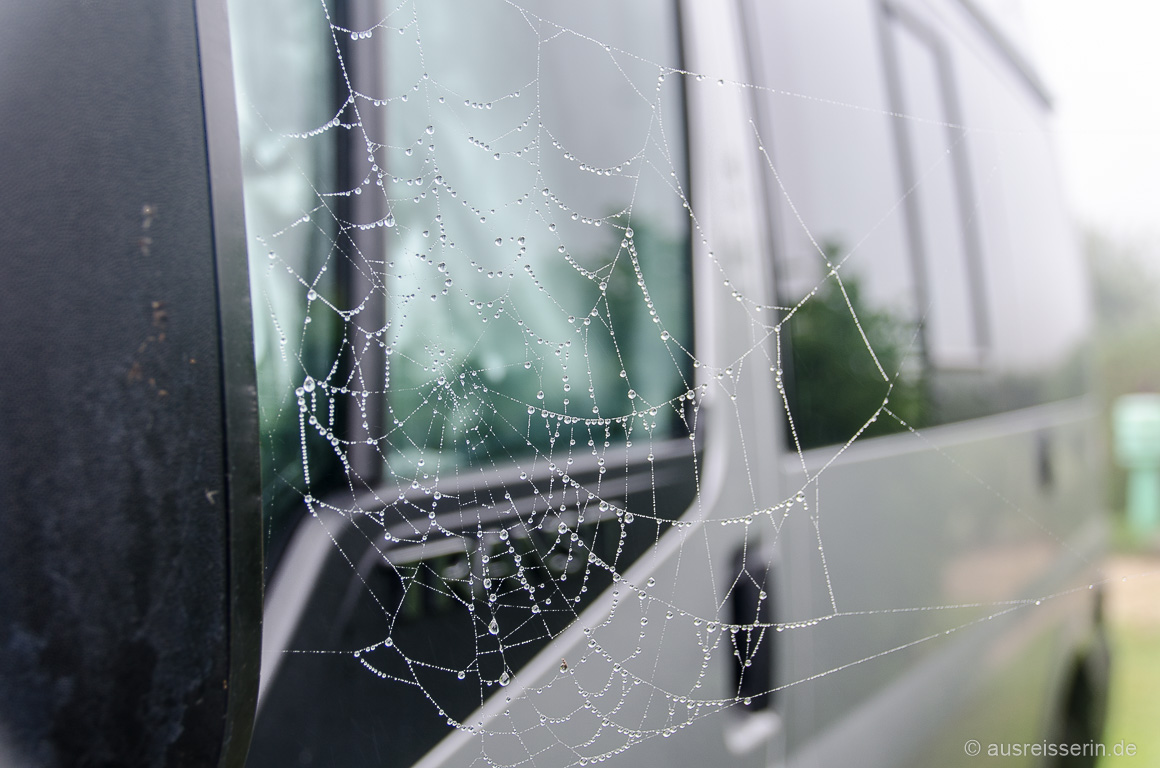 Nass. Spinnennetz nach Regen.