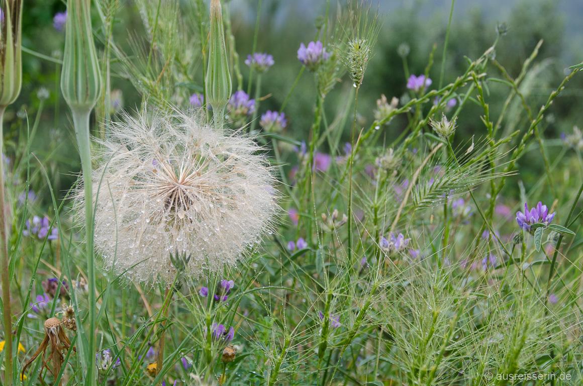 Nasse Blumenwiese