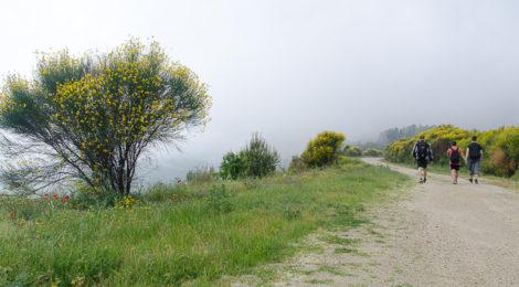 Wandern auf dem Kassandra Höhenweg