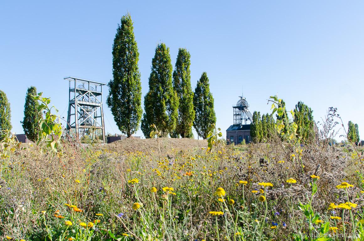 Bienenwiese vor der Zeche Gneisenau (Dortmund)