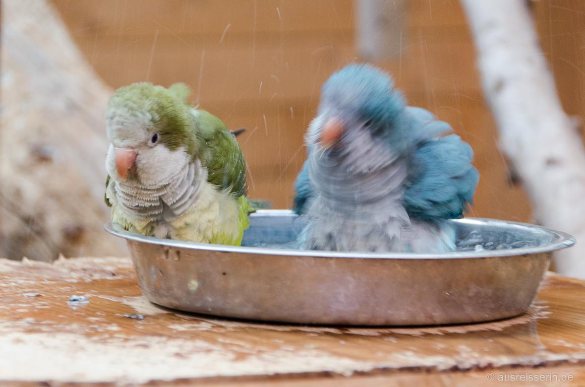 Tierischer Badespaß