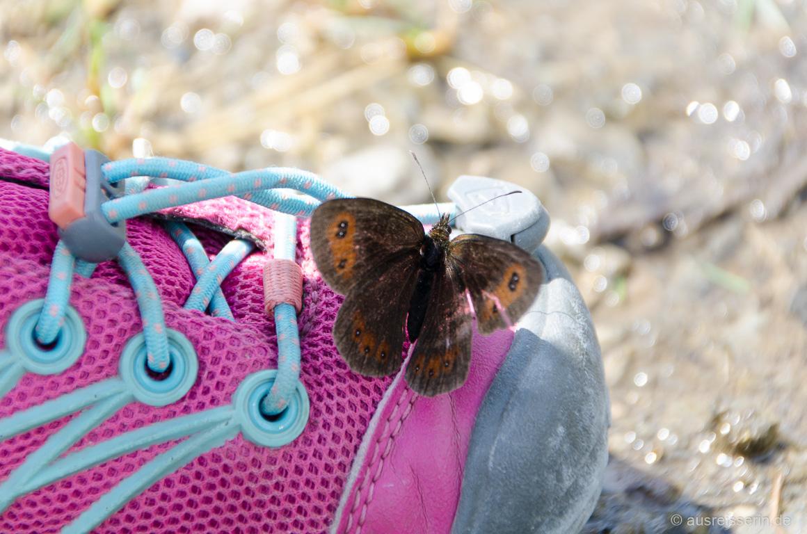 Schmetterling auf Lottas Wanderschuh