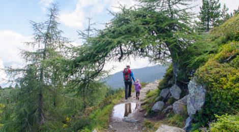 Zirbenweg in Tirol