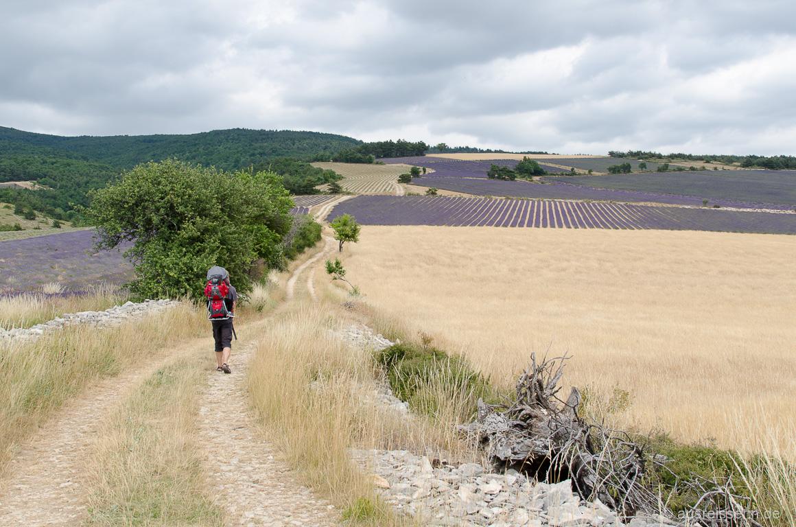 Lavendellehrpfad